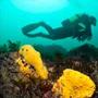 Plongée sous-marine Audierne